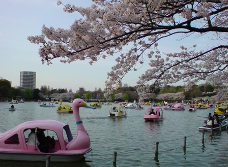 Shinobazu-pond & sakura.jpg