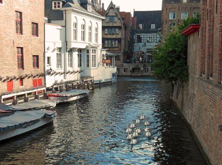 brugge canal swan.jpg
