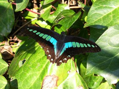 butterfly in nov.jpg