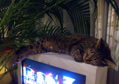 cat sleeping on the TV.jpg