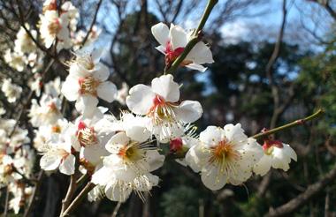koishikawa acro.jpg