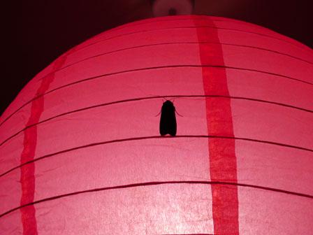 moth on the lantern.jpg