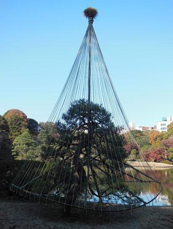 rikugien pine tree 2.jpg