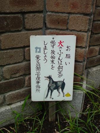 shibamata dog.jpg