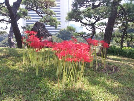 shibarikyu hibanbana 1.jpg